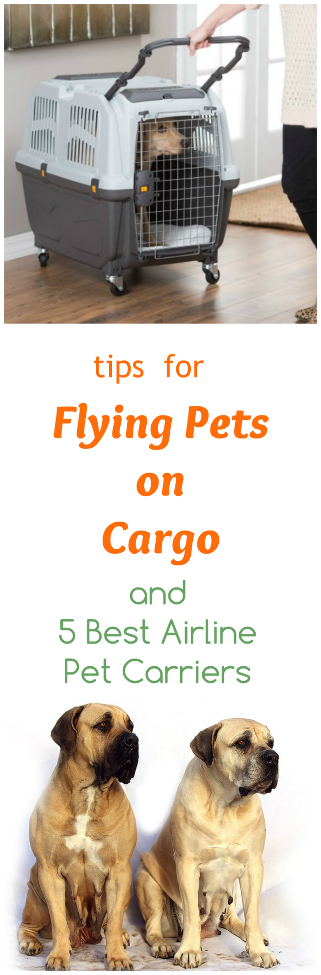 5 Best Pet Carriers And Tips For Safer Airline Cargo Flights