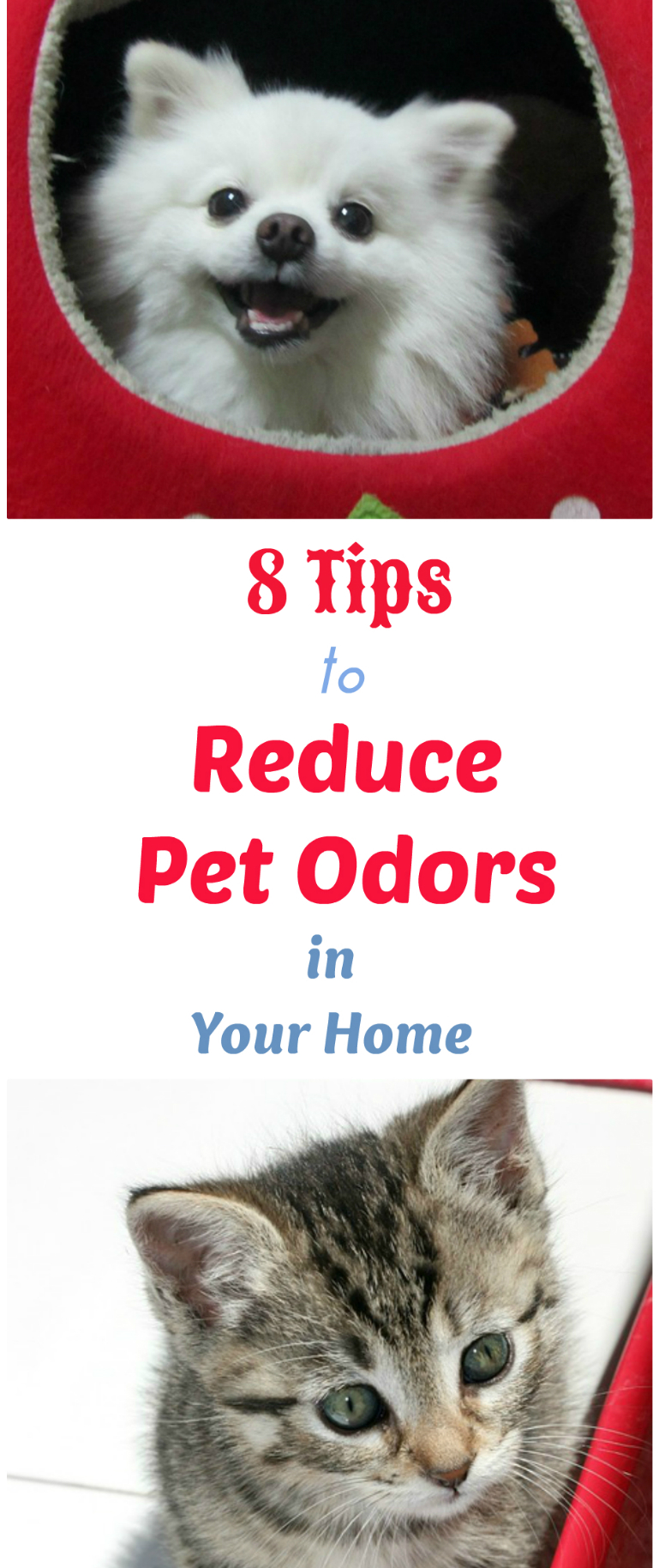 House Odors 8 tips to reduce pet odors and make your house less stinky