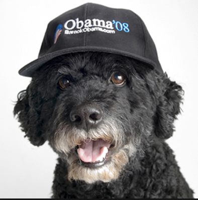 2017 Will Be A First For A Pet-less White House | Petslady com