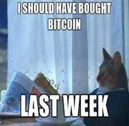 The Top 10 Bitcoin Pet Memes Of 2017 Petslady Com
