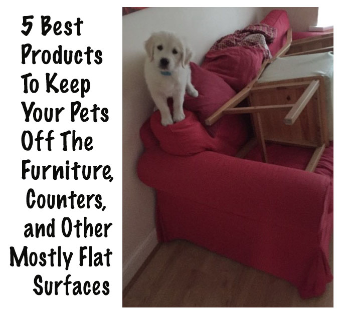 5 Best Products To Keep Your Pets Off Furniture, Counters, And Other Mostly  Flat Surfaces | Petslady.com