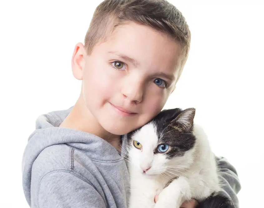 A Boy A Cat A Bully A Cleft Lip 2 Different Color Eyes Petslady Com