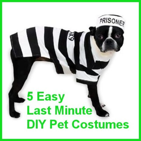 5 easy diy pet costumes for the last minute procrastinator 5 easy diy pet costumes for the last minute procrastinator petslady solutioingenieria Choice Image
