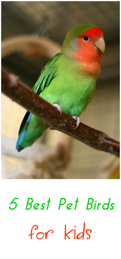 what is a good bird for a pet