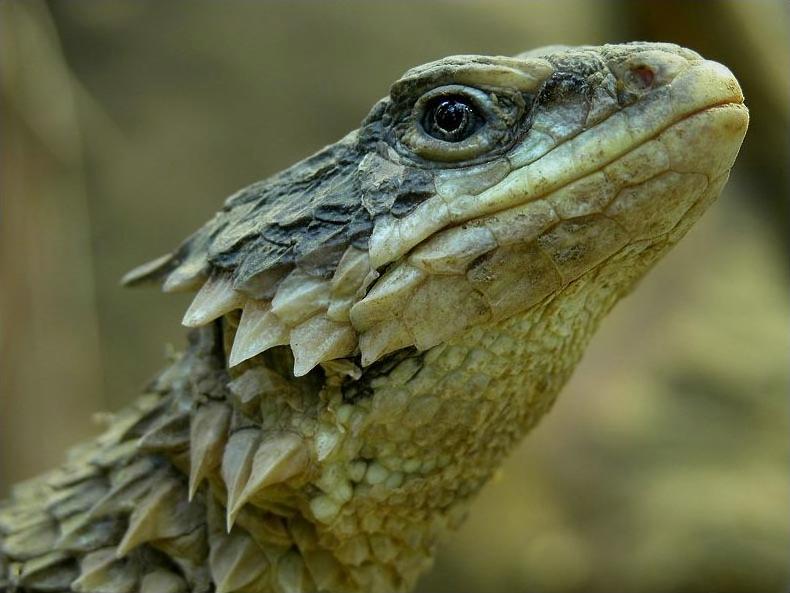 Smaug Giganteus: Here Be Your Dragons | Petslady com