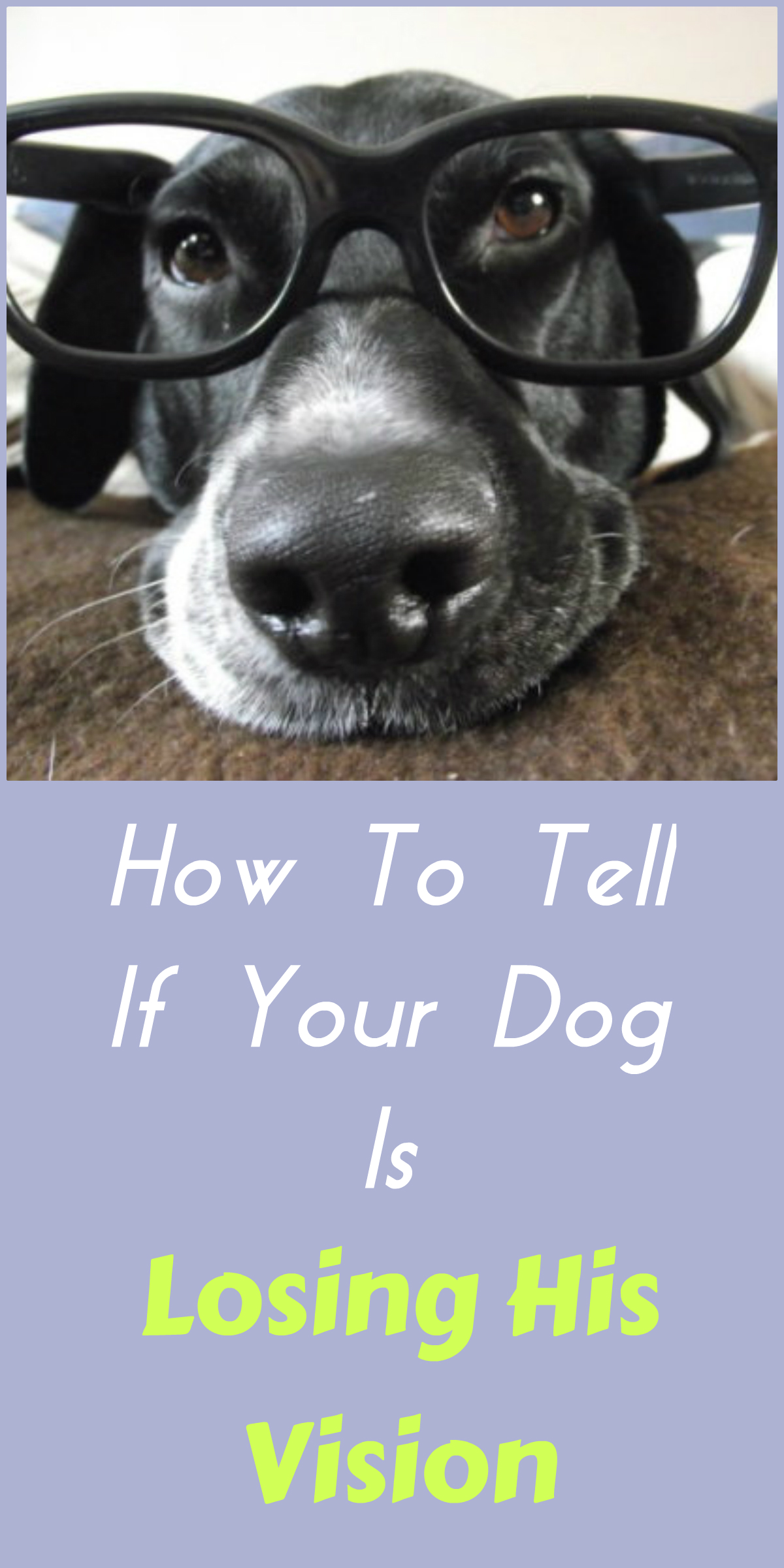 How to Tell if Your Dog Is in Heat foto