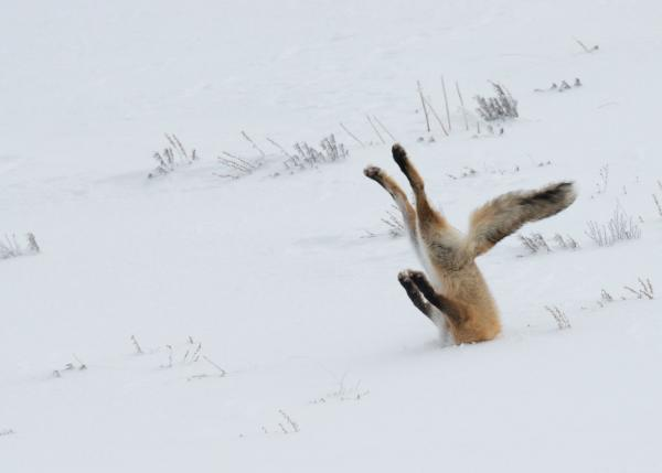 Winner 2016 Comedy Wildlife Photography, Angela Bohlke, Photographer
