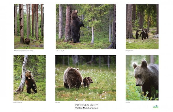 Amazing Internet Portfolio Award, 2018: Collection of bear studies by Valtteri Mulkahainen