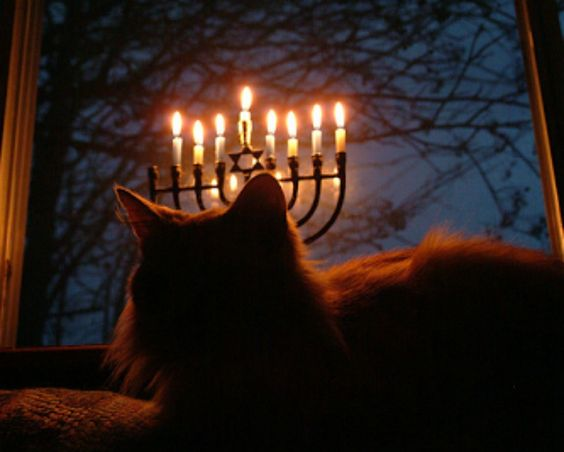 Hanukkah Shadow Cat