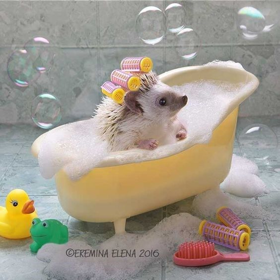 Bubble Bath Hedgehog