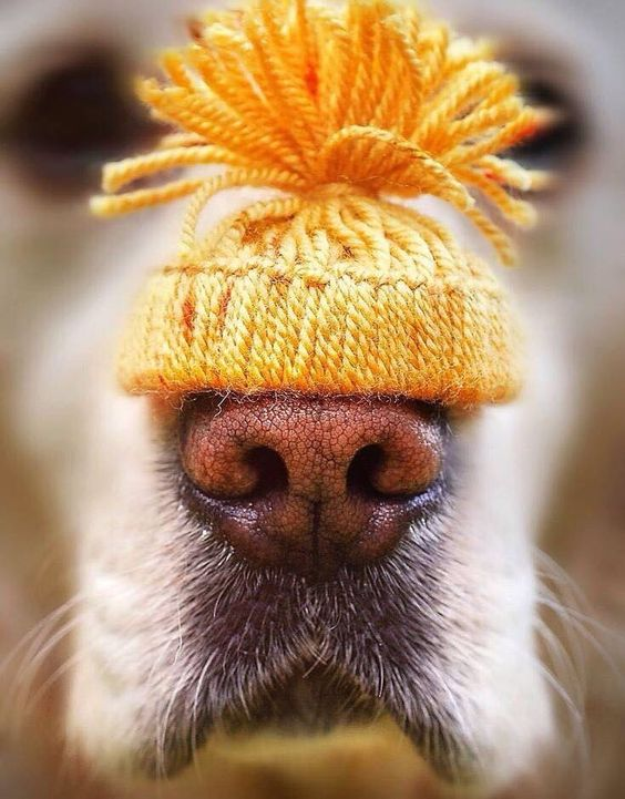 Doggie Nose Hat