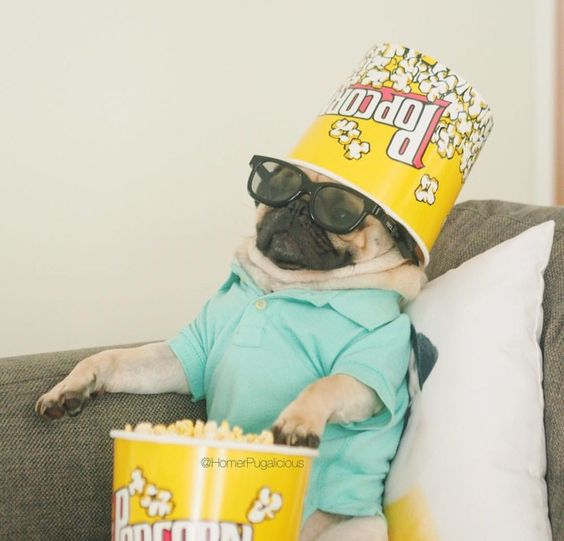 Movie Binge-Watching Dog