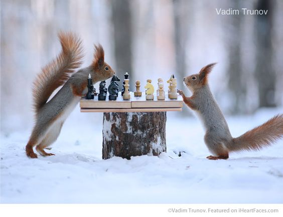 Squirrel Chess Game