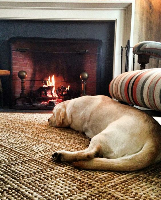 Lab by the Fire