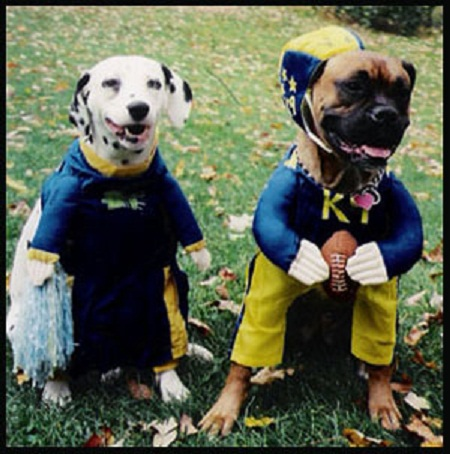 Dog pair in football and cheerleader costumes: image via costumedogs.com
