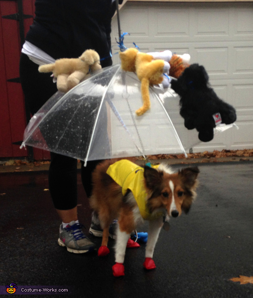 Umbrella Dog