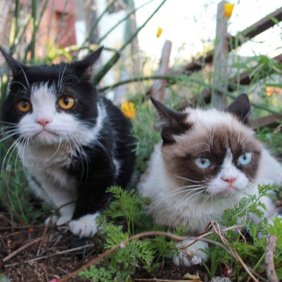 Grumpy Cat and Friend