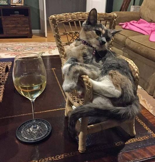 Wine-Drinking Cat