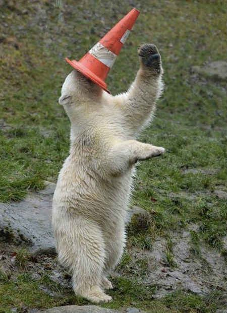Party Animal Polar Bear
