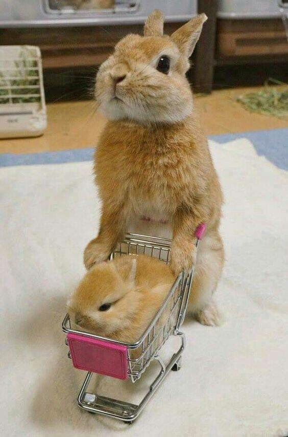 Shopping Bunnies