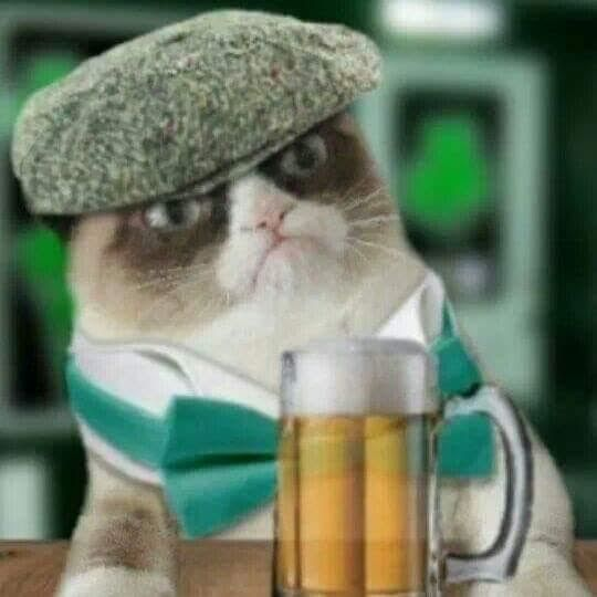 Beer-Drinking Gumpy Cat