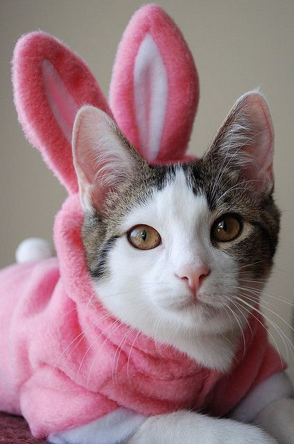 Easter Bunny Cat