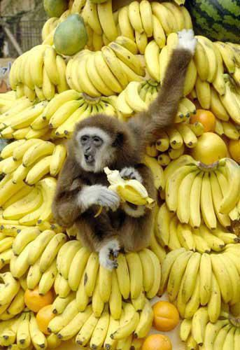 Monkey and Bananas
