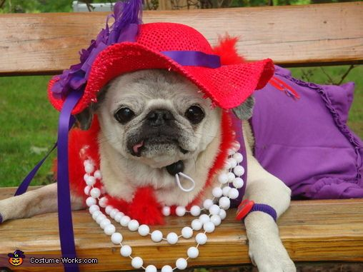 Red Hat Society Dog