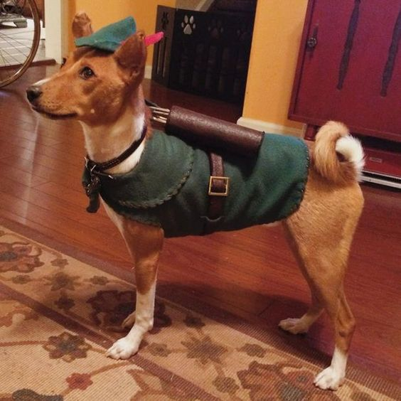 Robin Hood Dog