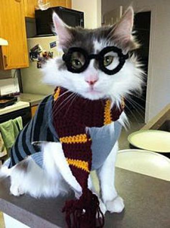 Harry Potter Cat
