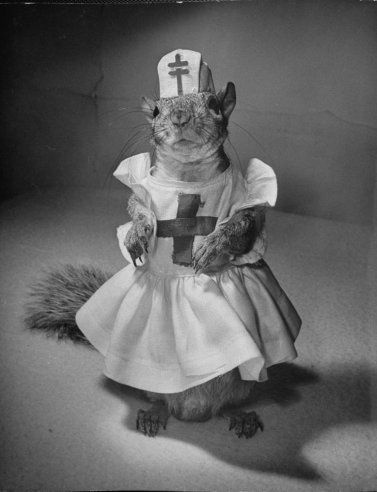 Squirrel Nurse