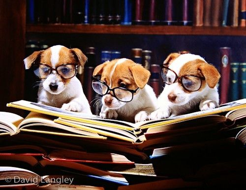 Scholarly Puppies