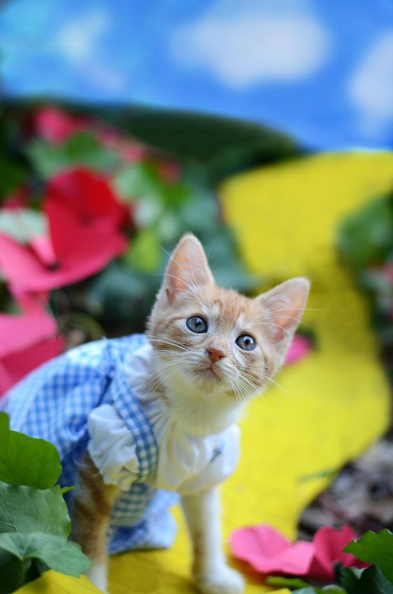 Wizard of Oz Kitten