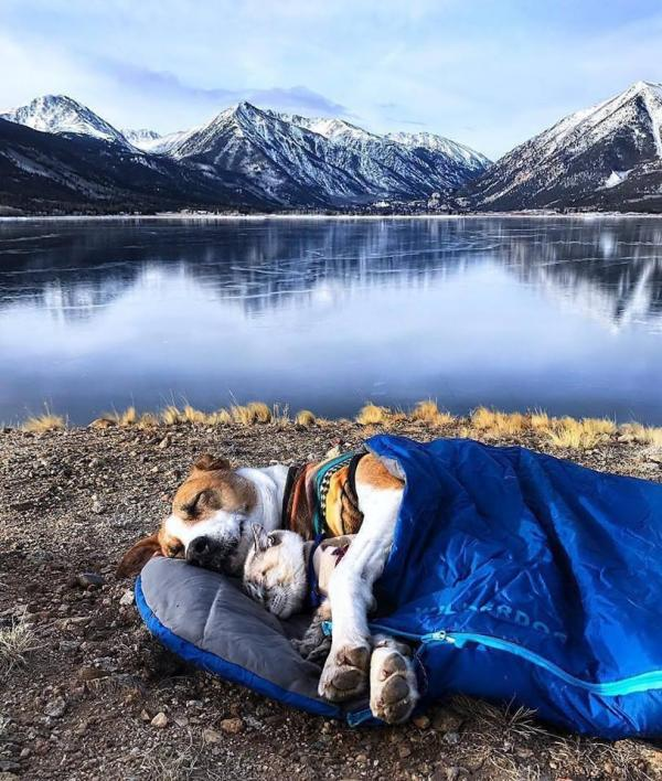 Camping Dog and Cat