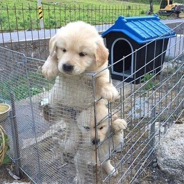 Great Puppy Escape