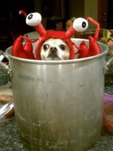 Lobster Dog