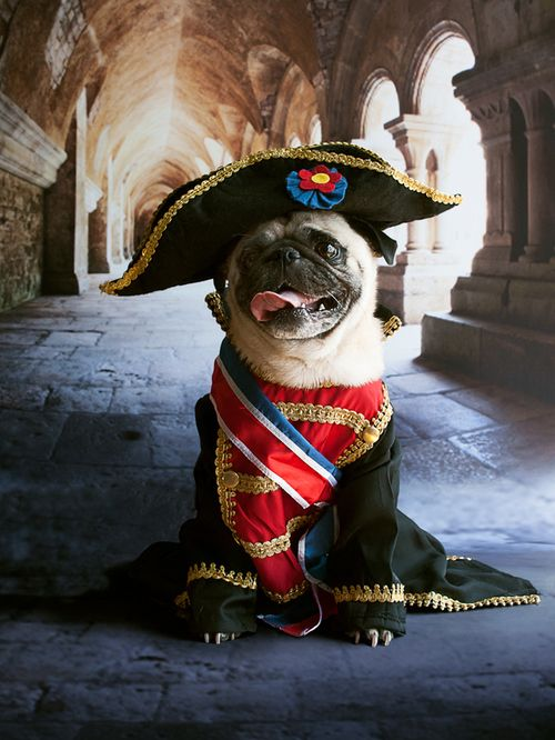 French Pug