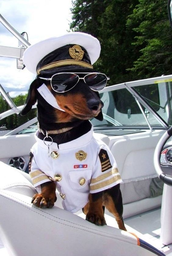 Nautical Dog