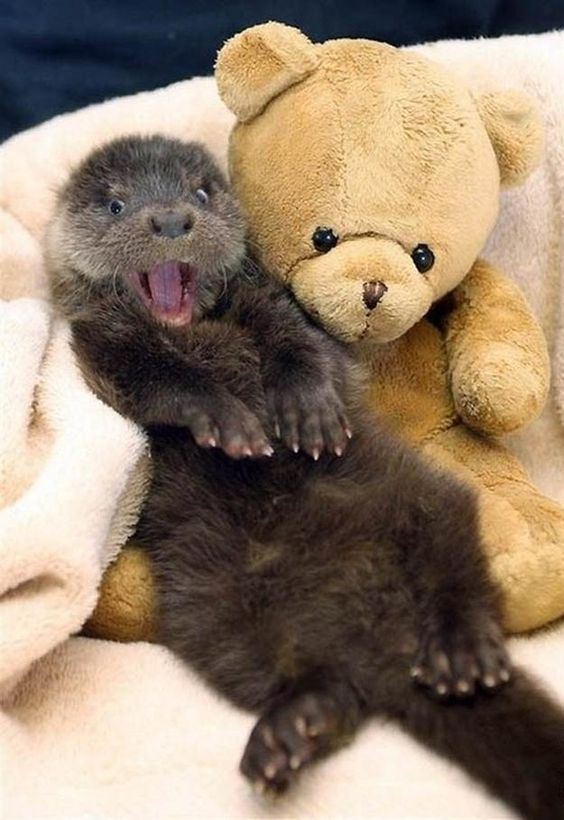 Otter and Teddy Bear