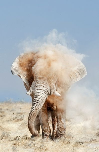 Dusty Elephant