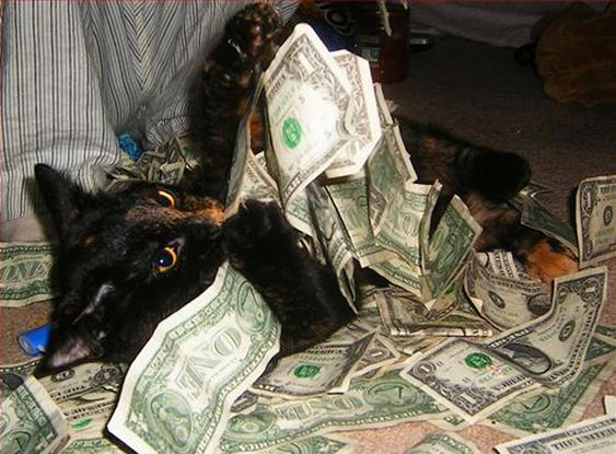 Wealthy Cat