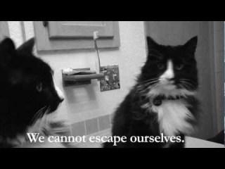 Henri 2, Paw de Deux video: video by William Brandon