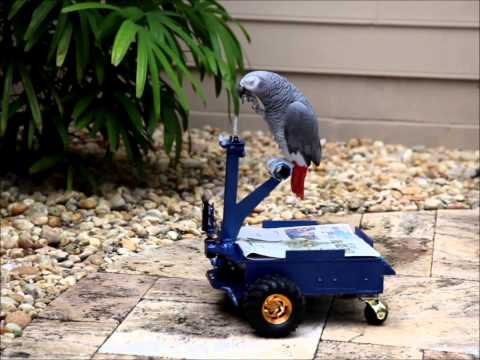 Bird Buggy by Andrew Gray, driven by Pepper: image via youtube.com