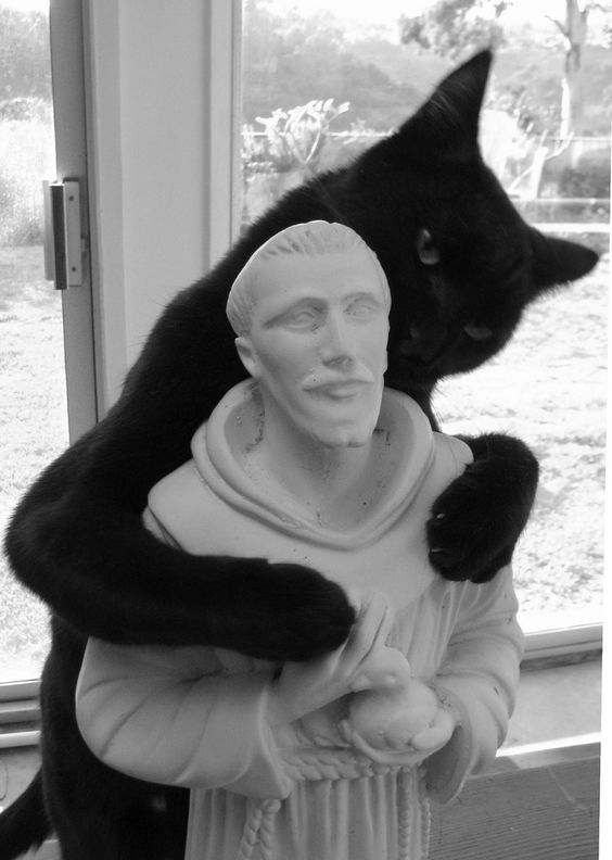 Cat with Saint Francis