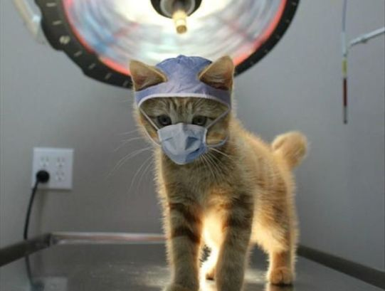 Cat Scan (Image Dump a Day)