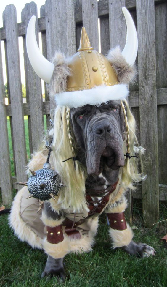 Viking Bloodhound