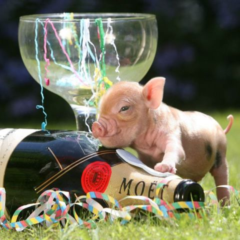 New Year's Piglet