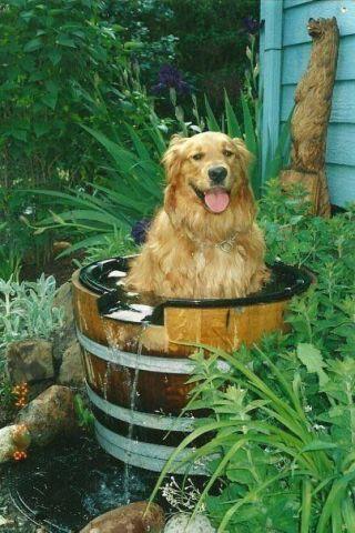Fountain Dog (Image via Pinterest)