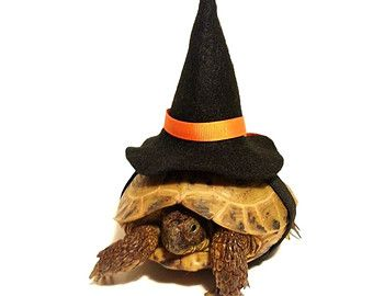 Witchy Turtle