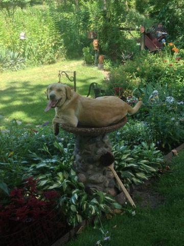 Bird Dog (Image via Imgur)